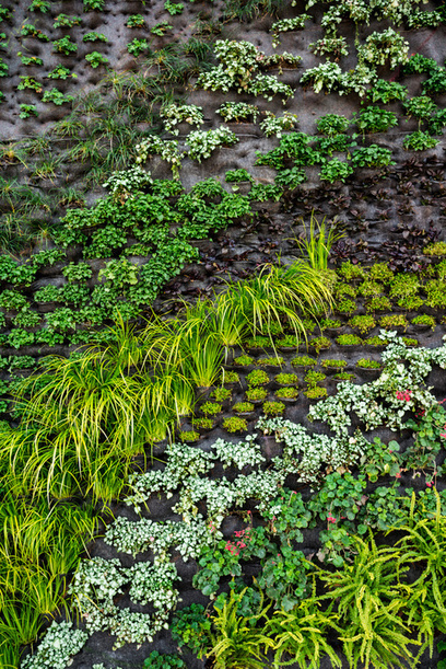 A Green Wall in Silicon Valley | The Butter | Scoop.it