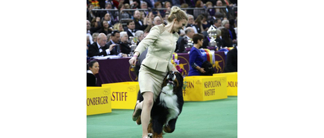 Westminster Dog Show - A Love Story | Cats | Scoop.it
