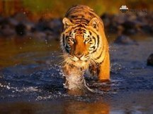 Indian Adventure Tour Package For Wildlife | India Tour Packages | Scoop.it