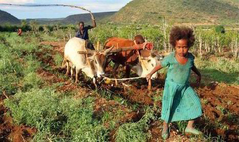 Ethiopian farmer sues UK over our foreign aid handouts - Express.co.uk | UNIT 4 | Scoop.it