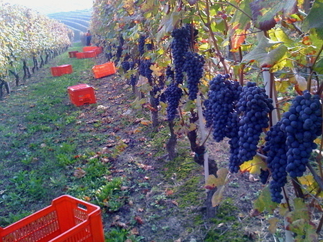 "10 Reasons to Drink ""Real"" Italian Wine | Italia Mia | Scoop.it"