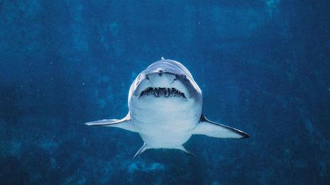 Magnet barriers could save sharks | TRIZ et Innovation | Scoop.it