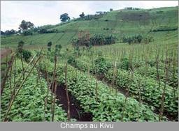 RD Congo - Développement du secteur agricole : Le gouvernement peaufine des stratégies avec l'ONUDI   International aid trends from a Belgian perspective   Scoop.it