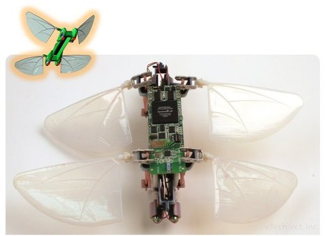 Dragonfly : Vous ne verrez plus les insectes de la même façon | EntomoNews | Scoop.it