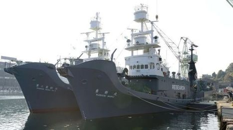 Japanese whaling ships depart for Antarctic hunt - BBC News | enjoy yourself | Scoop.it
