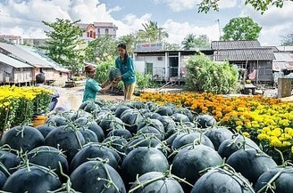 Vietnam: Back to Organic? | The Diplomat | Energy, Carbon and Nutrient Cycles | Scoop.it