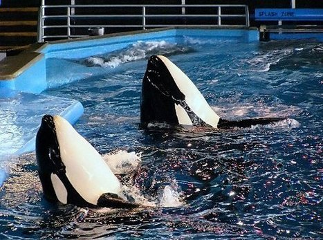 Tell Producers to Cut SeaWorld Scenes Out of 'Anchorman' Sequel | The Scuba News | All about water, the oceans, environmental issues | Scoop.it