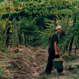 Filiera vino, cresce l'emergenza prezzi | Comunikafood | Scoop.it