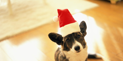 Tips To Keep Your Dog Safe This Holiday Season | It's Show Prep for Radio | Scoop.it