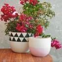 Fibreglass Pots Melbourne   Alexanice Interior Design Products   Scoop.it
