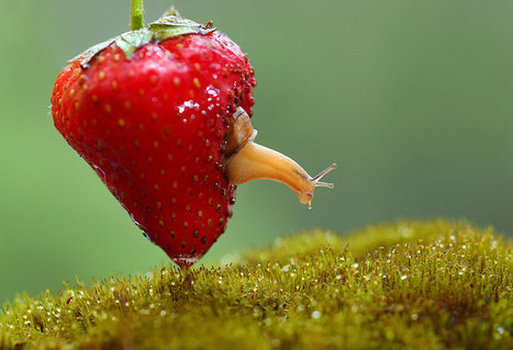 27 Gorgeous Photos Of Bugs and Snails | photo | Scoop.it