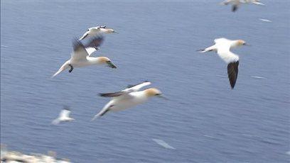 Le tiers des espèces d'oiseaux d'Amérique du Nord menacées d'extinction | Biodiversité & Relations Homme - Nature - Environnement : Un Scoop.it du Muséum de Toulouse | Scoop.it