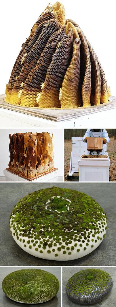 designvagabond: nature and art | nature tech | Scoop.it