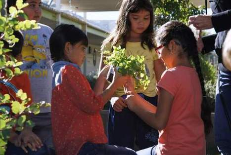 School garden yields more crops than imagined | Precision Agriculture | Scoop.it