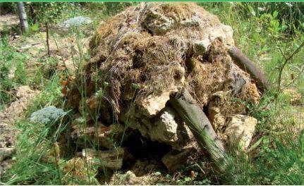 Les insectes du jardin naturel : Le tas de pierres, un abri pour l'hiver   Les colocs du jardin   Scoop.it