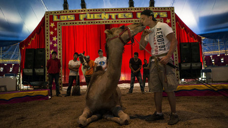 Worry Under the Big Top as Mexico City Moves to Ban Circus Animals   Animal rights   Scoop.it