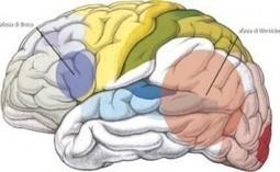 Afasia: un disturbo del linguaggio   Mind & Brain   Psicologia, neuropsicologia e neuroscienze   Scoop.it