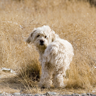 A Stray Dog in Kansas Finds a Home After Eight Years | Food for Pets | Scoop.it