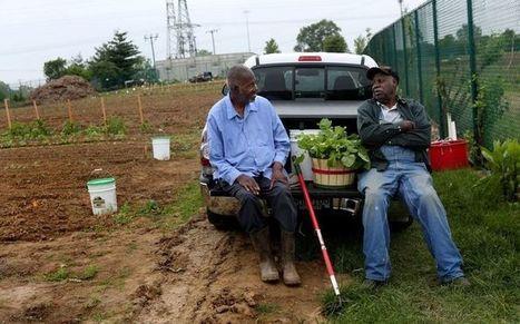 Urban farmers find new fields, fertile ground in Berkeley. Missouri | Community Gardening Resources | Scoop.it