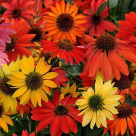 Bloomingwriter: Gardening in Nova Scotia: New under the garden sun, part 1: Perennial Pleasures. | Flowers | Scoop.it