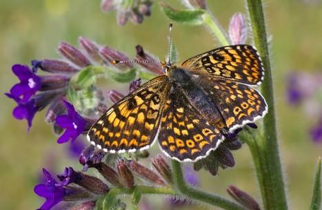 Papillon : un métabolisme actif augmenterait l'espérance de vie | Mes passions natures | Scoop.it