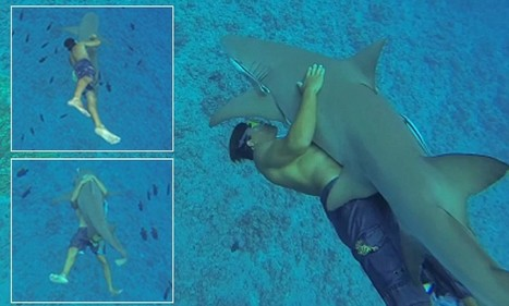 Fearless holidaymaker bear-hugs 8ft shark so he's inches from its jaws | Travel News Travel Tips | Scoop.it