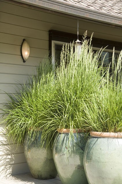 garden and yard | Cool Sites I love | Scoop.it