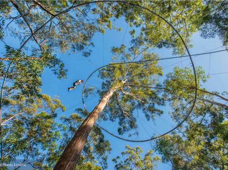Vosges : le parc Bol d'Air ouvre la première tyrolienne à virages de France ! | Aires de jeux | Scoop.it