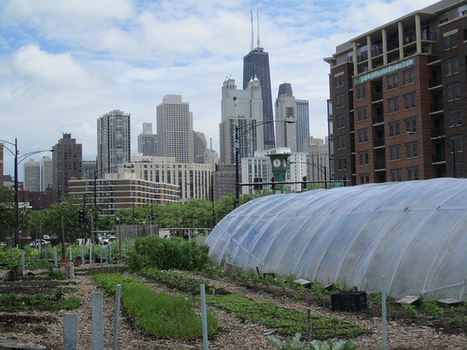 Chicago's urban farms have yet to harvest sustainable jobs, better health | Food issues | Scoop.it