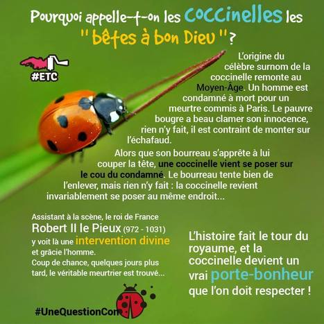 Les coccinelles... | Remue-méninges FLE | Scoop.it