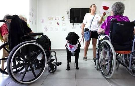De perro abandonado y maltratado a apoyo terapéutico | Personas y Animales | Scoop.it