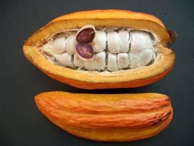 Ghana 2012 mid-crop cocoa seen down 60 pct: sources | L'économie africaine sous toutes ses coutures | Scoop.it