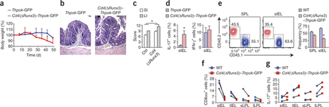 gut CD4 T cells can switch to CD8 cytotoxic. Nat Immunol 20 january 2013 | Immunology for University Students | Scoop.it