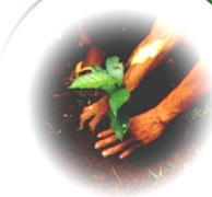 Trees for the Future. I suggested planting trees and here's how to do it! | Share Some Love Today | Scoop.it