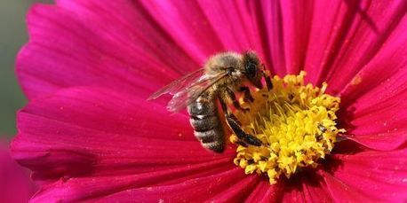 Comment Bruxelles veut protéger les abeilles sans bannir les pesticides | Un peu de tout et de rien ... | Scoop.it