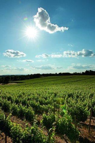 Castas com grande futuro | vinhos | Scoop.it