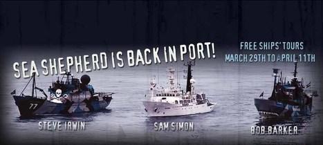 Sea Shepherd Australia   Antarctica at HFS   Scoop.it