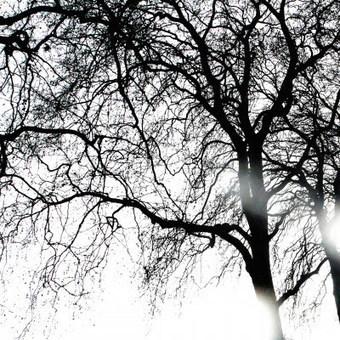 Tué par un arbre (Ongles, 14 décembre 1755) | Rhit Genealogie | Scoop.it