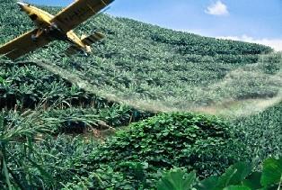 Epandage aérien de pesticides : le tribunal administratif de Basse-Terre annule les arrêtés préfectoraux | Abeilles, intoxications et informations | Scoop.it