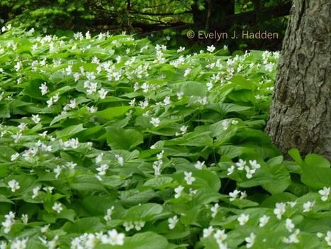 Less Lawn, More Butterflies | 100 Acre Wood | Scoop.it