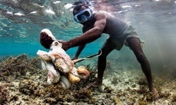 Madagascar fishing villagers learn that the way to survive is not to catch fish | Biodiversité | Scoop.it
