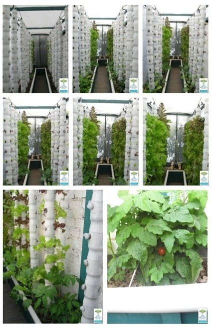 Vertical Aquaponics - Aquaponic Gardening | Vertical Farm - Food Factory | Scoop.it
