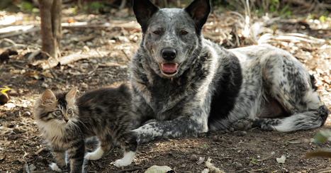 Dog Lends Helping Paw to Disabled Cat [VIDEO] | Good Advice | Scoop.it