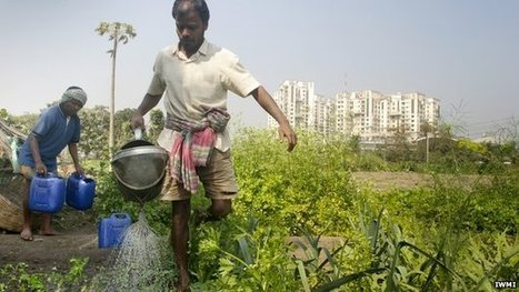 Urban farming helps feed the world | A2 Sustainability (WJEC) | Scoop.it