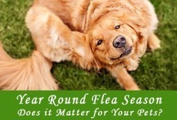 Year Round Flea Season – Does it Matter for Your Pets? - BudgetPetCare.com | Pet Care | Scoop.it