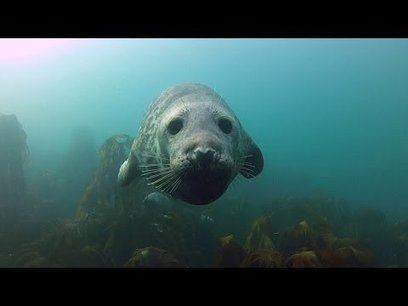 Video: Scuba Diving Photographer Gets Up Close & Personal with Cuddly ... - PetaPixel | Scuba Dive Travel | Scoop.it