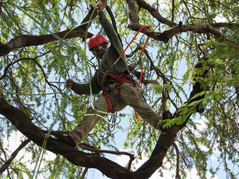 Tree Services Lawrenceville GA | Tree Cutting, Removal, Trimming | Tree Service Lawrenceville | Scoop.it