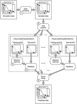 A Machine Learning Method for the Prediction of Receptor Activation in the Simulation of Synapses | Social Foraging | Scoop.it