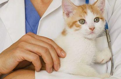 Accudimento del gatto: la lettiera, il veterinario e l'alimentazione ...   ResVet e il farmaco...veterinario!   Scoop.it