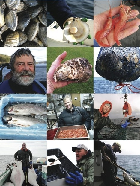 Slow Food Canada launches the Slow Fish Canada campaign ...   Slow community   Scoop.it